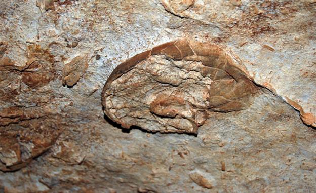fosil en la cueva de las calaveras